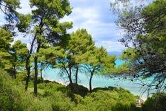 Сосны на пляже стоковое фото rf