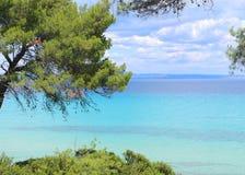 Сосны на пляже стоковое изображение