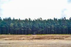 Сосны на пляже Стоковое Изображение RF