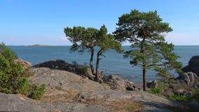 2 сосны на скалистом береге полуострова Hanko Южная Финляндия сток-видео