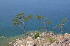 3 сосны на скалистом береге Lake Baikal стоковое изображение