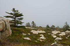 Сосны на скалистой земле в туманном дне Стоковые Изображения