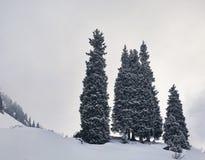 Сосны на снежных горах стоковые фото