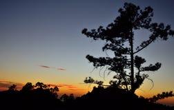 Сосны подсвеченные на наступлении ночи, Pilancones, Gran canaria Стоковая Фотография