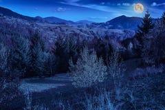Сосны приближают к долине в горах и лесу осени на hillsid Стоковое Фото