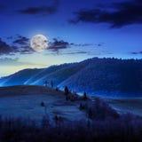 Сосны приближают к долине в горах на горном склоне под небом с Стоковые Изображения RF
