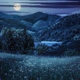 Сосны приближают к лугу в горах на ноче Стоковое Изображение RF