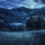 Сосны приближают к лугу в горах на ноче Стоковые Изображения