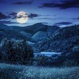 Сосны приближают к лугу в горах на ноче Стоковые Фотографии RF