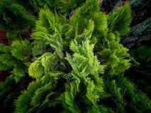 Сосны растя на баках стоковые изображения