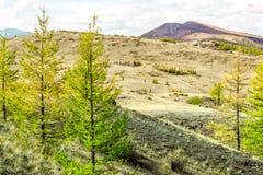 Сосны с горами на заднем плане стоковая фотография rf