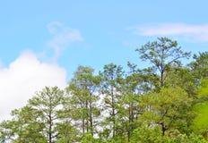 Сосны стоковое изображение