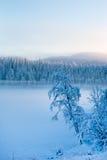 Сосны Snowy с туманом на ландшафте зимы Стоковые Изображения