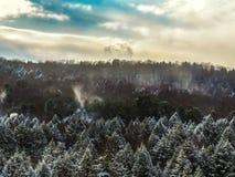 Сосны Snowy Стоковая Фотография