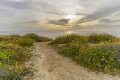 Сосны Torrey, пляж Сан-Диего, Калифорния стоковое изображение