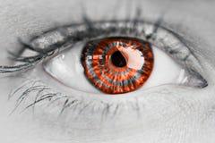 Составное изображение конца вверх женского голубого глаза Стоковое Изображение RF