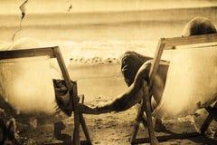 Составное изображение милых пар держа руки пока лежащ на их шезлонгах Стоковое Изображение