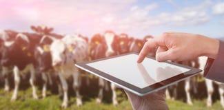 Составное изображение подрезанных рук бизнесмена используя цифровую таблетку Стоковые Изображения