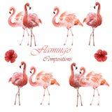 Составы акварели розовых фламинго изолированных на белой предпосылке стоковое фото rf