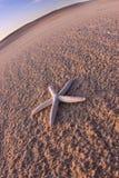 составы пляжа зашкурят раковины стоковые фотографии rf