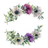 Состав акварели флористический с красочной ветреницей Рука покрасила белые, фиолетовые, розовые цветки и листья изолированные дал иллюстрация штока