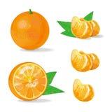 Состав апельсина и куска Иллюстрация плодоовощ также вектор иллюстрации притяжки corel Стоковая Фотография RF