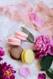 Состав весны: красочные macaroons с фиолетовыми и розовыми пионами, зеленым цветом выходят на светлую конкретную предпосылку и ро стоковая фотография