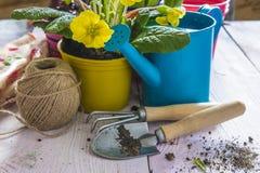 Состав весны садовничая с желтыми цветками в желтом баке, Стоковое фото RF