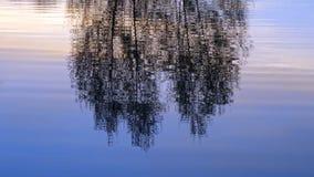 Состав дерева в отражении воды Стоковая Фотография