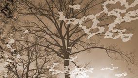 Состав дерева в отражении воды Стоковая Фотография RF