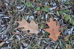 Состав жолудей и земли в лесе осени стоковые изображения