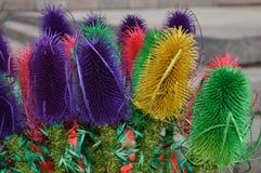 Состав завода и цветка сухой стоковые изображения