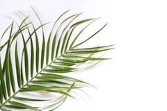 Состав зеленых листьев ладони изолированных на белой предпосылке лето seashells песка рамки принципиальной схемы предпосылки Троп Стоковые Фотографии RF