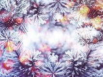 Состав знамени рождества на предпосылке и светах сосны Стоковые Фотографии RF