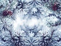 Состав знамени рождества на предпосылке сосны Стоковые Фотографии RF