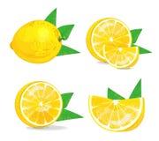 Состав лимона на белой предпосылке Сочный комплект плодоовощ также вектор иллюстрации притяжки corel Стоковое Изображение RF