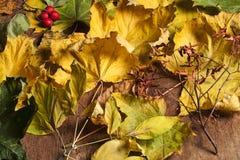 Состав листьев осени Стоковая Фотография