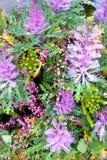 Состав красивого цветка восхитительный Стоковое фото RF