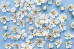 Состав малых белых цветков на голубой предпосылке Стоковое Фото