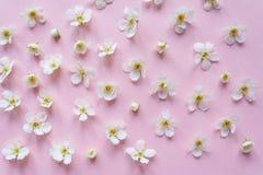 Состав малых белых цветков на розовой предпосылке Стоковая Фотография RF