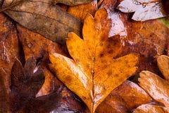 Состав осени, влажные листья коричневого цвета красивейшие детеныши женщины студии съемки танцы пар Стоковое Фото
