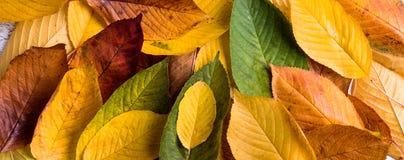 Состав осени, влажные красочные листья красивейшие детеныши женщины студии съемки танцы пар Стоковое фото RF