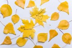 Состав осени - здравствуйте! изображение -го ноябрь, листьев осени на белой предпосылке стоковые фото