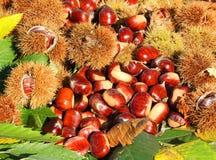 Состав осени листьев каштанов, ежа и каштана Стоковые Фото