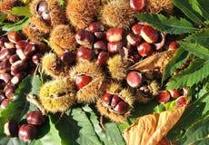 Состав осени листьев каштанов, ежа и каштана Стоковая Фотография