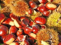Состав осени листьев каштанов, ежа и каштана Стоковое фото RF