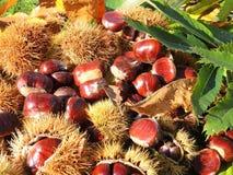 Состав осени листьев каштанов, ежа и каштана Стоковые Фотографии RF