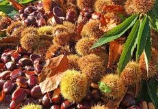 Состав осени листьев каштанов, ежа и каштана Стоковые Изображения RF