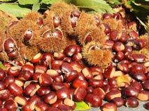 Состав осени листьев каштанов, ежа и каштана Стоковая Фотография RF