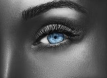 Состав очарования сияющий металлический профессиональный красивейший близкий глаз вверх Стоковое Изображение